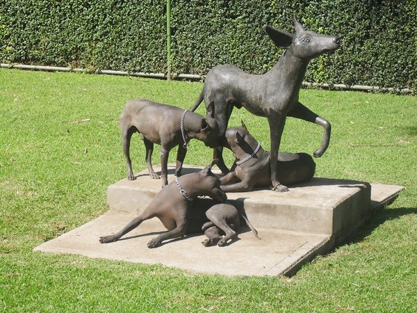 Xoloitzcuintle Dog Breed Information